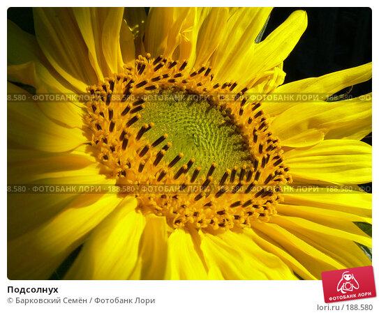 Купить «Подсолнух», фото № 188580, снято 29 июля 2006 г. (c) Барковский Семён / Фотобанк Лори