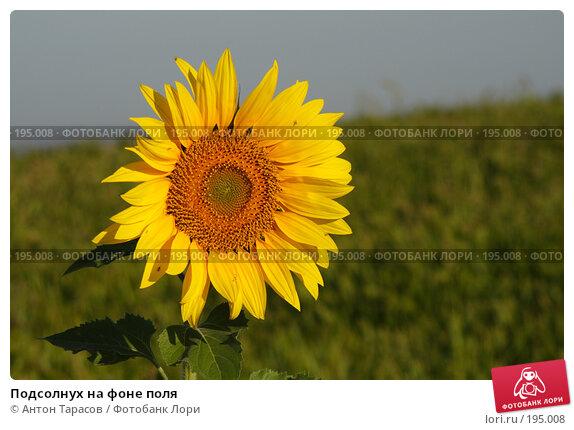 Подсолнух на фоне поля, фото № 195008, снято 12 августа 2007 г. (c) Антон Тарасов / Фотобанк Лори