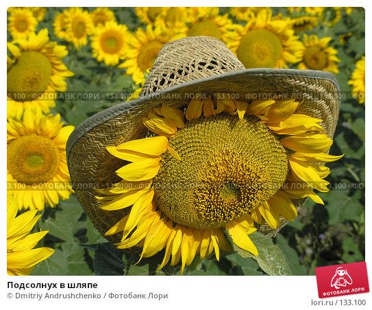 Подсолнух в шляпе, фото № 133100, снято 28 июля 2007 г. (c) Dmitriy Andrushchenko / Фотобанк Лори