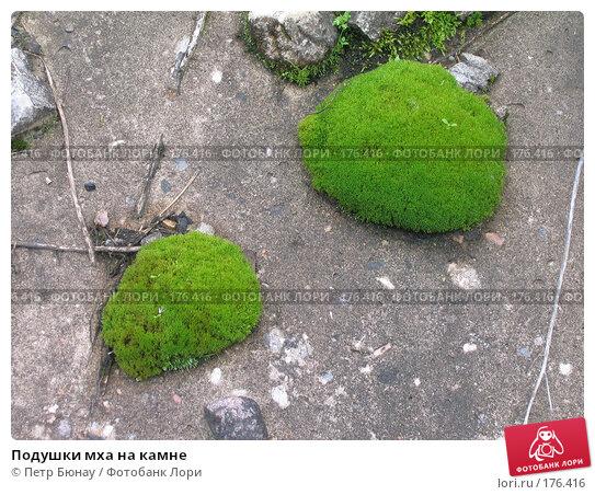 Подушки мха на камне, фото № 176416, снято 29 августа 2003 г. (c) Петр Бюнау / Фотобанк Лори
