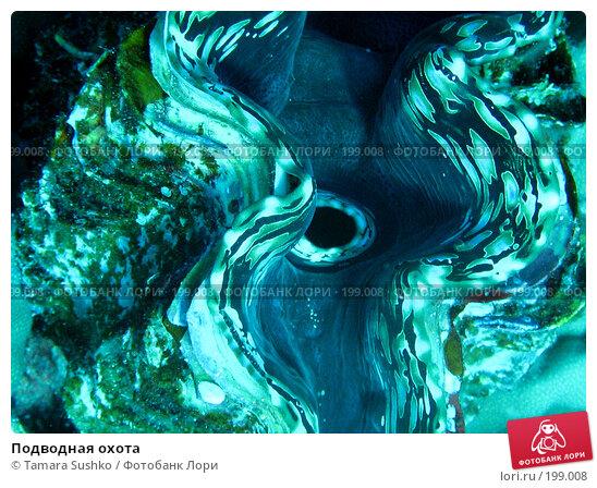 Купить «Подводная охота», фото № 199008, снято 18 ноября 2007 г. (c) Tamara Sushko / Фотобанк Лори