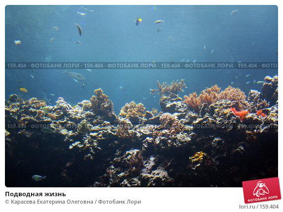 Подводная жизнь, фото № 159404, снято 17 августа 2007 г. (c) Карасева Екатерина Олеговна / Фотобанк Лори
