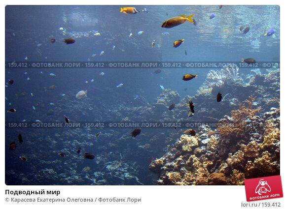Подводный мир, фото № 159412, снято 17 августа 2007 г. (c) Карасева Екатерина Олеговна / Фотобанк Лори