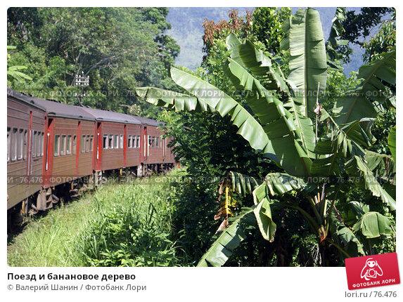Поезд и банановое дерево, фото № 76476, снято 6 июня 2007 г. (c) Валерий Шанин / Фотобанк Лори