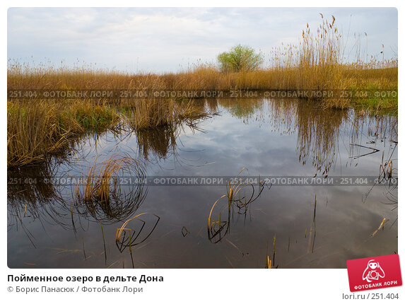Пойменное озеро в дельте Дона, фото № 251404, снято 11 апреля 2008 г. (c) Борис Панасюк / Фотобанк Лори