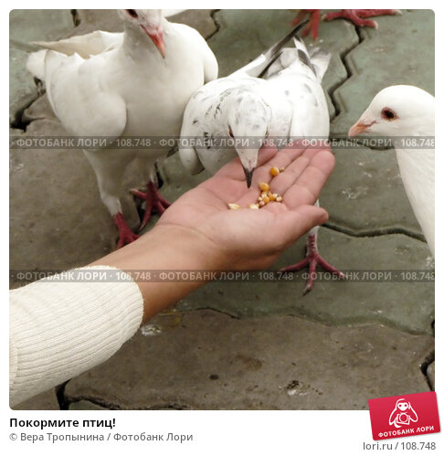 Покормите птиц!, фото № 108748, снято 29 октября 2016 г. (c) Вера Тропынина / Фотобанк Лори