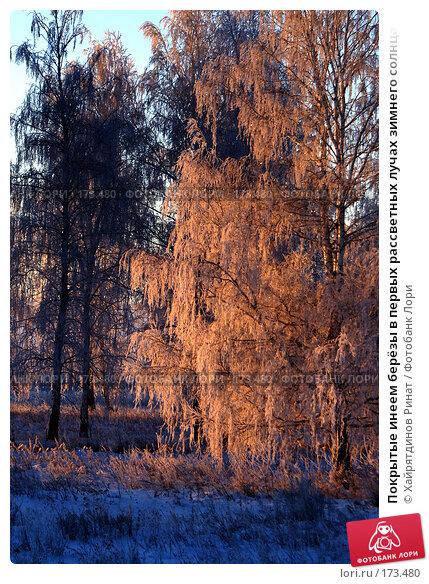Купить «Покрытые инеем берёзы в первых рассветных лучах зимнего солнца», фото № 173480, снято 7 января 2008 г. (c) Хайрятдинов Ринат / Фотобанк Лори