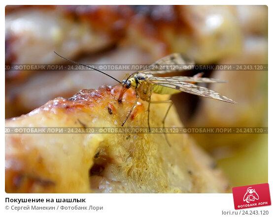 Покушение на шашлык. Стоковое фото, фотограф Сергей Манекин / Фотобанк Лори