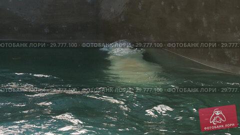 Купить «Polar bear playing in water», видеоролик № 29777100, снято 30 октября 2018 г. (c) Игорь Жоров / Фотобанк Лори