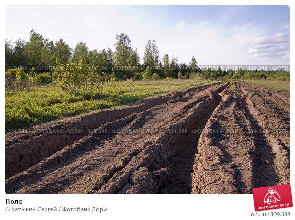 Купить «Поле», фото № 309388, снято 31 мая 2008 г. (c) Катыкин Сергей / Фотобанк Лори