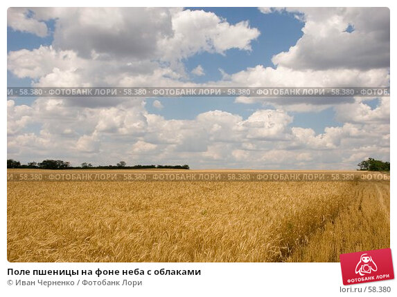 Поле пшеницы на фоне неба с облаками, фото № 58380, снято 1 июля 2007 г. (c) Иван Черненко / Фотобанк Лори
