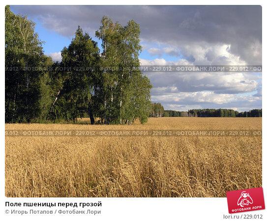 Поле пшеницы перед грозой, фото № 229012, снято 9 апреля 2006 г. (c) Игорь Потапов / Фотобанк Лори