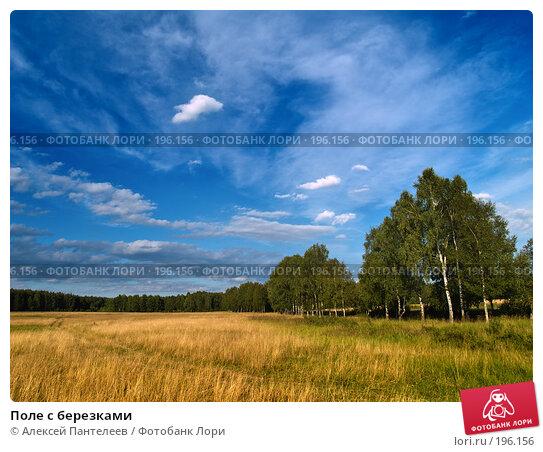 Поле с березками, фото № 196156, снято 23 июля 2007 г. (c) Алексей Пантелеев / Фотобанк Лори