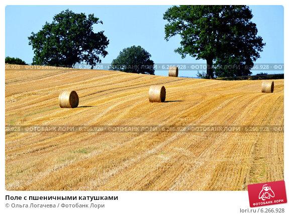 Купить «Поле с пшеничными катушками», фото № 6266928, снято 19 июля 2014 г. (c) Ольга Логачева / Фотобанк Лори