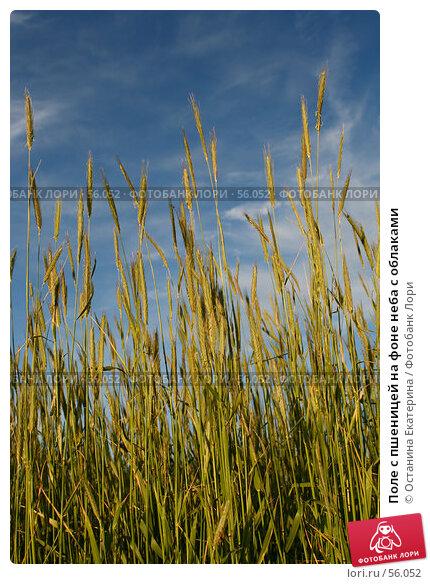 Поле с пшеницей на фоне неба с облаками, фото № 56052, снято 17 июня 2007 г. (c) Останина Екатерина / Фотобанк Лори