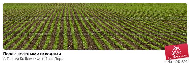 Поле с зелеными всходами, фото № 42800, снято 12 мая 2007 г. (c) Tamara Kulikova / Фотобанк Лори