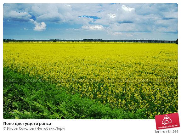 Поле цветущего рапса, фото № 84264, снято 22 мая 2017 г. (c) Игорь Соколов / Фотобанк Лори