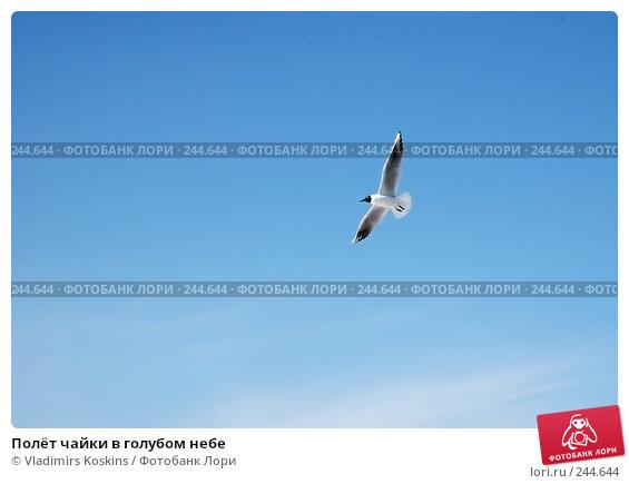 Купить «Полёт чайки в голубом небе», фото № 244644, снято 3 апреля 2005 г. (c) Vladimirs Koskins / Фотобанк Лори