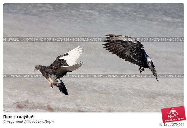 Полет голубей, фото № 279924, снято 5 апреля 2008 г. (c) Argument / Фотобанк Лори