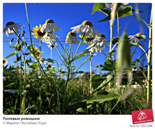 Полевые ромашки, фото № 257596, снято 20 августа 2005 г. (c) Марина / Фотобанк Лори
