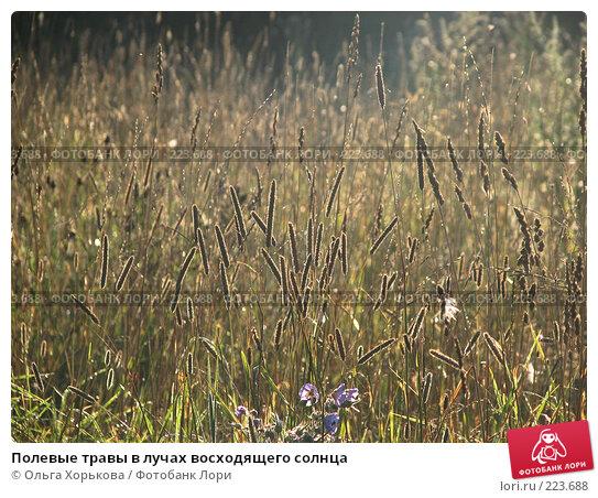 Купить «Полевые травы в лучах восходящего солнца», фото № 223688, снято 23 апреля 2018 г. (c) Ольга Хорькова / Фотобанк Лори