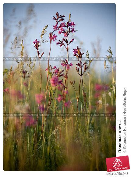 Полевые цветы, фото № 50948, снято 3 июня 2007 г. (c) Лисовская Наталья / Фотобанк Лори