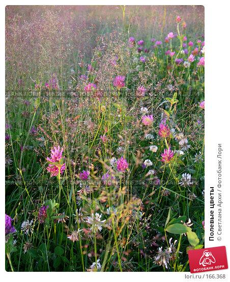 Купить «Полевые цветы», фото № 166368, снято 24 июня 2005 г. (c) Светлана Архи / Фотобанк Лори