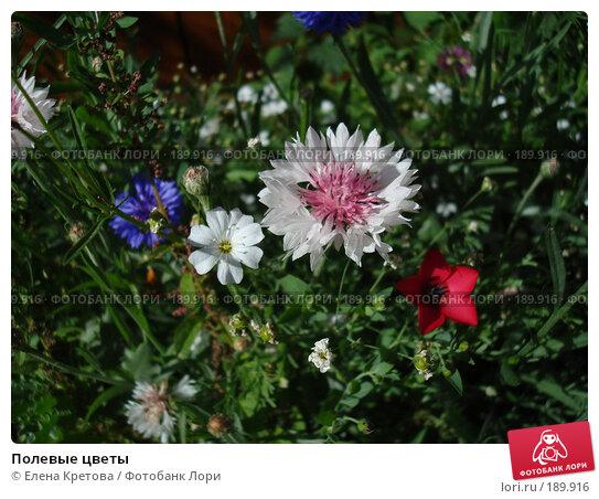 Купить «Полевые цветы», фото № 189916, снято 5 марта 2007 г. (c) Елена Кретова / Фотобанк Лори