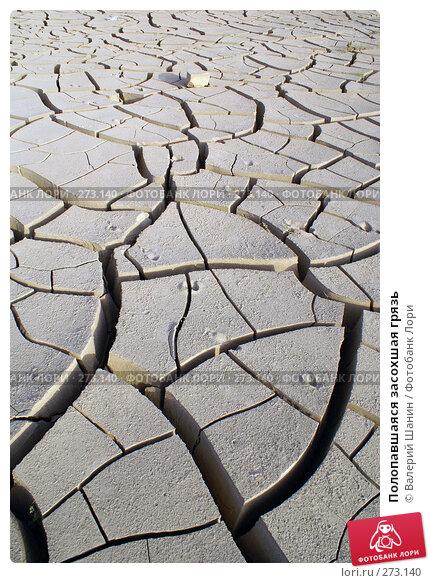 Полопавшаяся засохшая грязь, фото № 273140, снято 28 ноября 2007 г. (c) Валерий Шанин / Фотобанк Лори