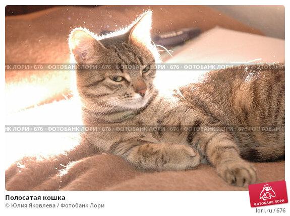 Полосатая кошка, фото № 676, снято 30 января 2005 г. (c) Юлия Яковлева / Фотобанк Лори