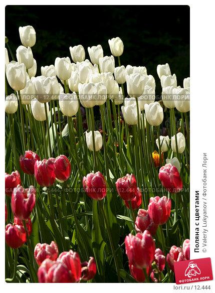 Купить «Поляна с цветами», фото № 12444, снято 26 мая 2006 г. (c) Valeriy Lukyanov / Фотобанк Лори