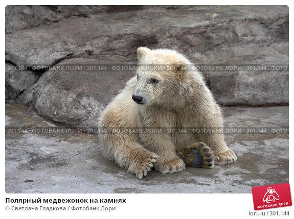 Полярный медвежонок на камнях, фото № 301144, снято 19 апреля 2008 г. (c) Cветлана Гладкова / Фотобанк Лори