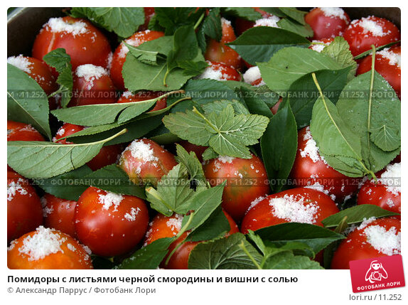 Помидоры с листьями черной смородины и вишни с солью, фото № 11252, снято 27 августа 2006 г. (c) Александр Паррус / Фотобанк Лори