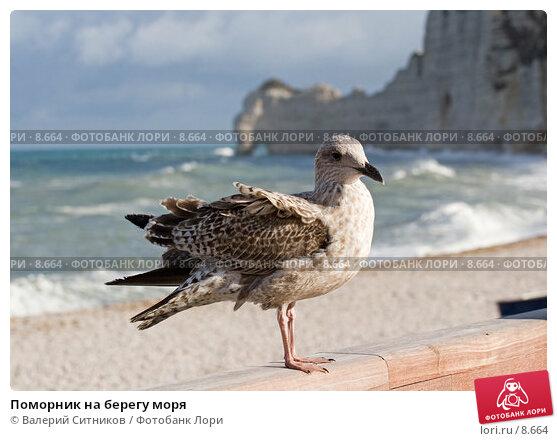 Поморник на берегу моря , фото № 8664, снято 20 октября 2005 г. (c) Валерий Ситников / Фотобанк Лори