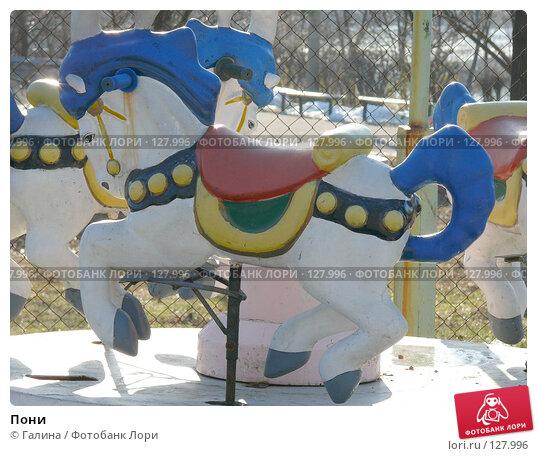 Пони, фото № 127996, снято 27 ноября 2007 г. (c) Галина Щеглова / Фотобанк Лори