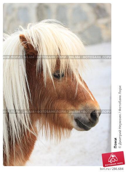 Пони, эксклюзивное фото № 286684, снято 26 апреля 2008 г. (c) Дмитрий Неумоин / Фотобанк Лори