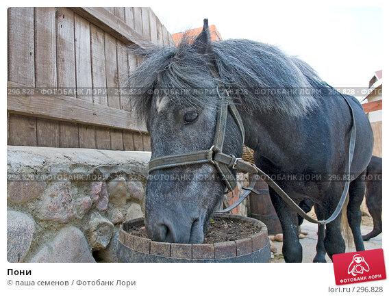 Купить «Пони», фото № 296828, снято 6 июня 2007 г. (c) паша семенов / Фотобанк Лори