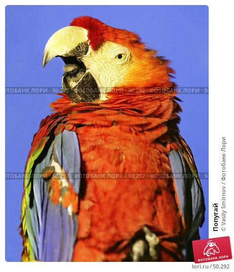 Купить «Попугай», фото № 50292, снято 4 января 2005 г. (c) Vasily Smirnov / Фотобанк Лори