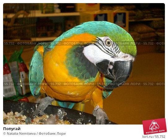 Попугай, эксклюзивное фото № 55732, снято 8 марта 2007 г. (c) Natalia Nemtseva / Фотобанк Лори