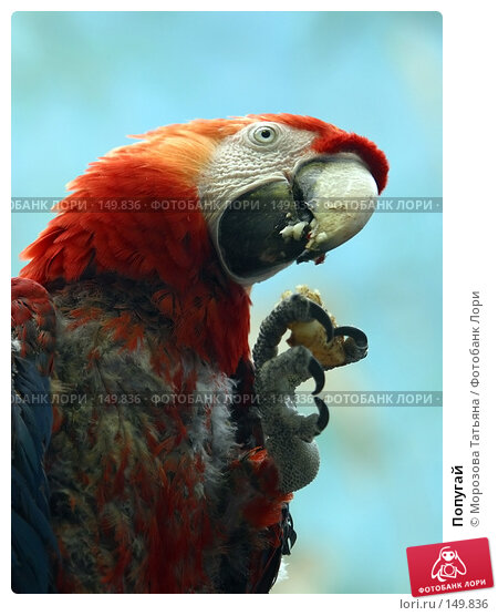 Попугай, фото № 149836, снято 29 апреля 2004 г. (c) Морозова Татьяна / Фотобанк Лори