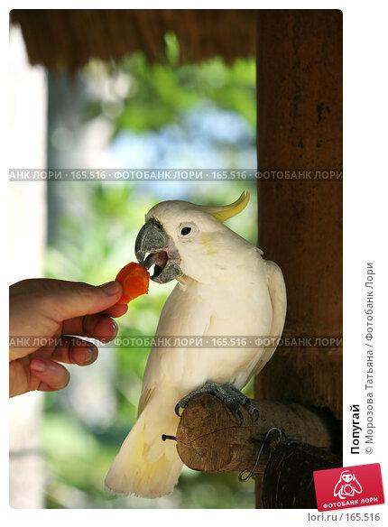 Попугай, фото № 165516, снято 23 октября 2007 г. (c) Морозова Татьяна / Фотобанк Лори