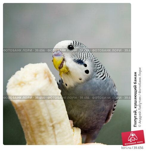 Попугай, кушающий банан, фото № 39656, снято 21 апреля 2007 г. (c) Андрей Лабутин / Фотобанк Лори