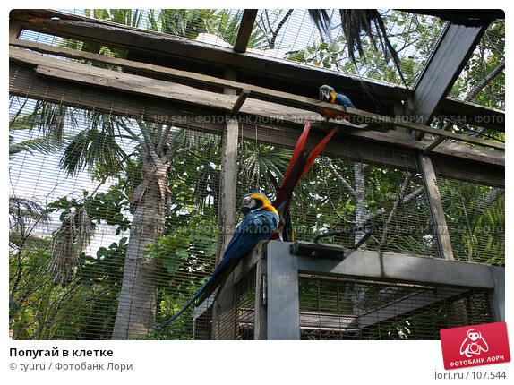 Попугай в клетке, фото № 107544, снято 9 июня 2007 г. (c) tyuru / Фотобанк Лори