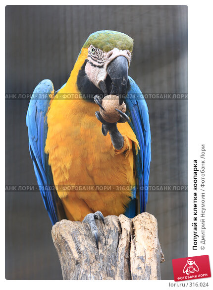 Попугай в клетке зоопарка, эксклюзивное фото № 316024, снято 28 апреля 2008 г. (c) Дмитрий Неумоин / Фотобанк Лори