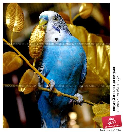Попугай в золотых ветках, фото № 256244, снято 19 апреля 2008 г. (c) RedTC / Фотобанк Лори