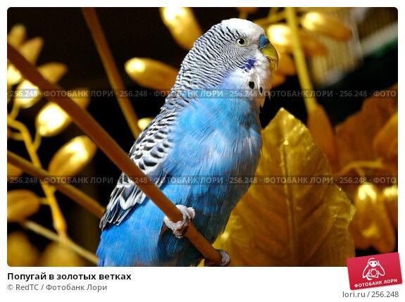 Попугай в золотых ветках, фото № 256248, снято 19 апреля 2008 г. (c) RedTC / Фотобанк Лори
