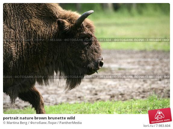 Купить «portrait nature brown brunette wild», фото № 7983604, снято 24 апреля 2019 г. (c) PantherMedia / Фотобанк Лори