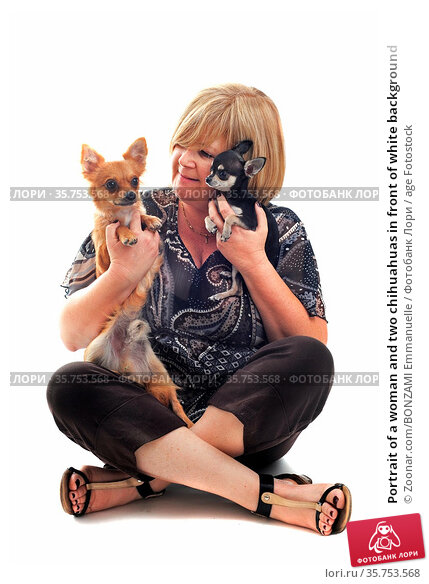 Portrait of a woman and two chihuahuas in front of white background. Стоковое фото, фотограф Zoonar.com/BONZAMI Emmanuelle / age Fotostock / Фотобанк Лори