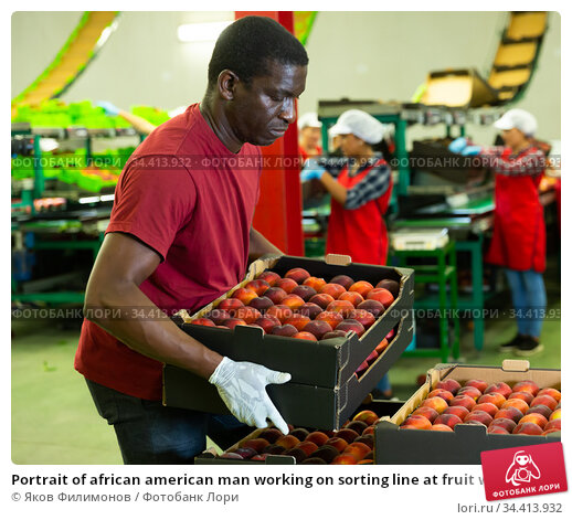 Portrait of african american man working on sorting line at fruit warehouse, stacking boxes with selected peaches. Стоковое фото, фотограф Яков Филимонов / Фотобанк Лори