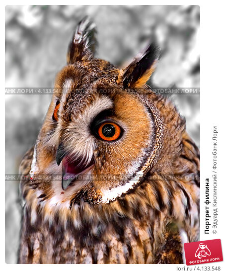 owl catching the mouse - photo #11